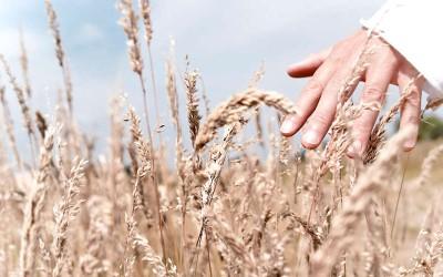 El consumo de productos ecológicos crece